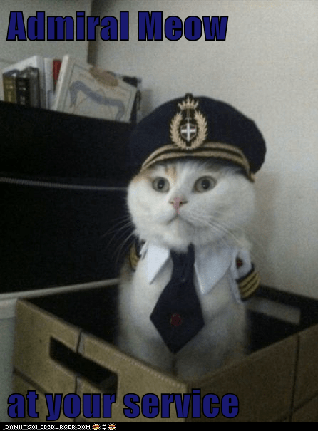 Admiral Meow  at your service