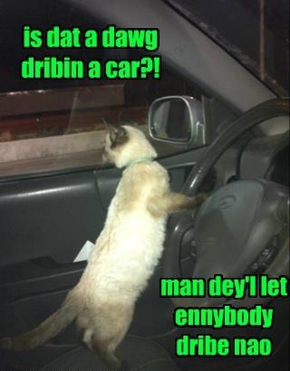Sed Teh Feline At Teh Wheel