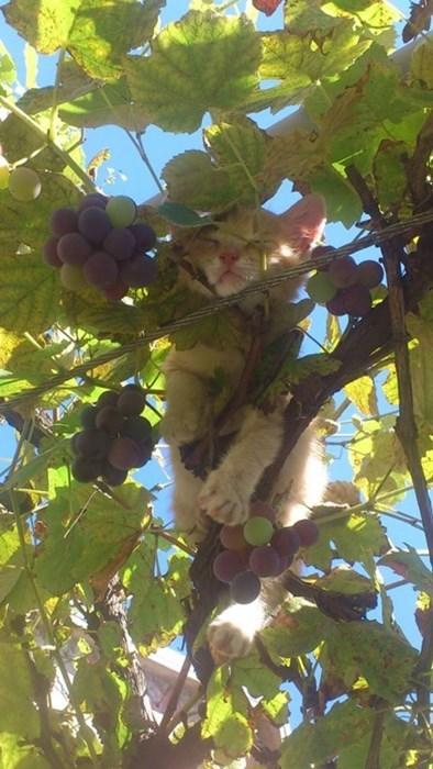 Cats,oh snap,tree
