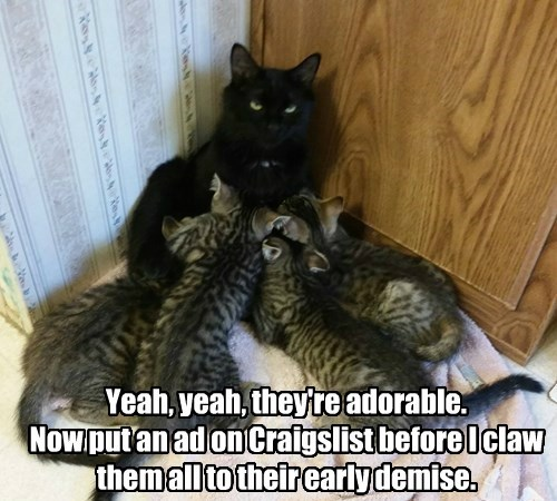 Yeah, yeah, they're adorable.  Now put an ad on Craigslist before I claw them all to their early demise.