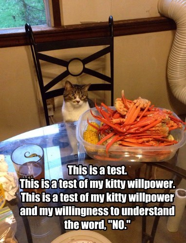 """This is a test. This is a test of my kitty willpower. This is a test of my kitty willpower and my willingness to understand the word, """"NO."""""""