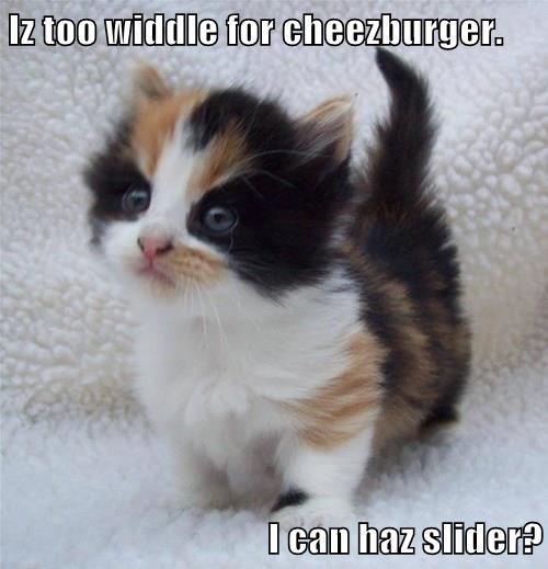 Iz too widdle for cheezburger.  I can haz slider?