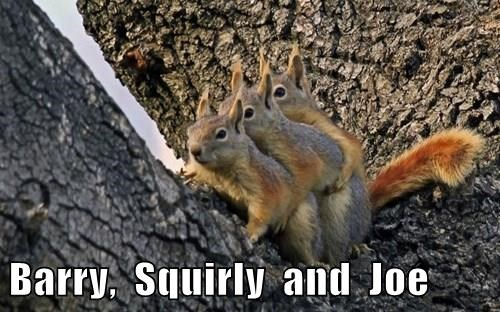Barry,  Squirly  and  Joe