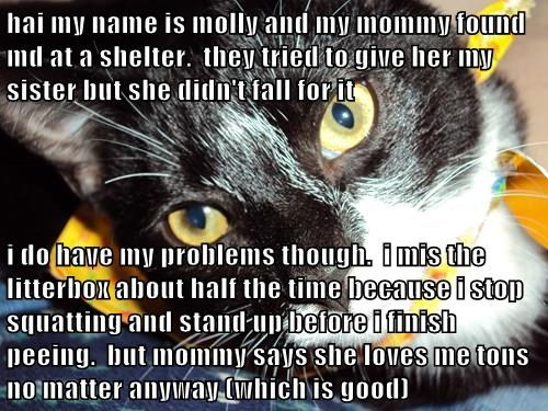 hai my name is molly and my mommy found md at a shelter.  they tried to give her my sister but she didn't fall for it  i do have my problems though.  i mis the litterbox about half the time because i stop squatting and stand up before i finish peeing.  bu