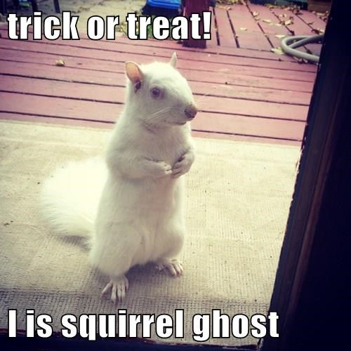 trick or treat!  I is squirrel ghost