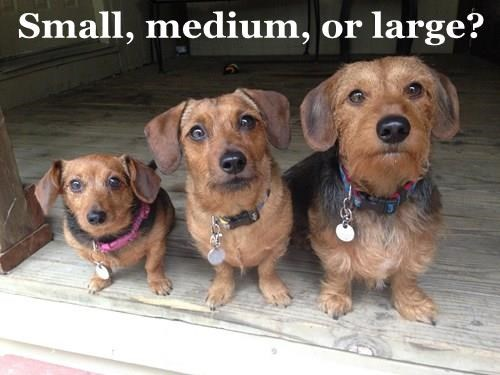 Small, medium, or large?