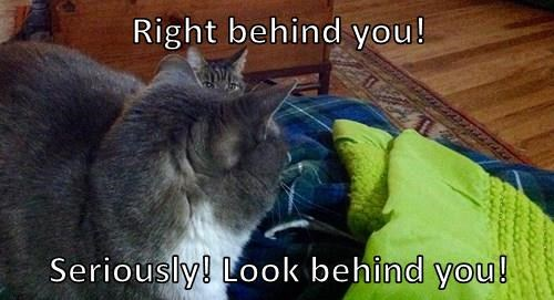 Right behind you!   Seriously! Look behind you!