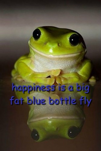 happiness is a big fat blue bottle fly