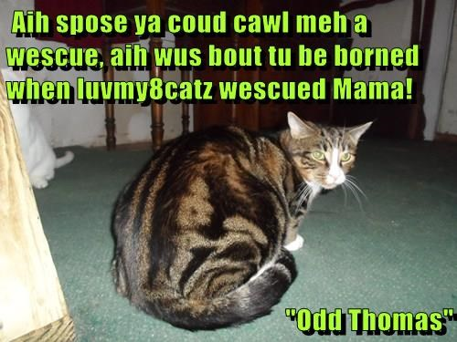 """Aih spose ya coud cawl meh a wescue, aih wus bout tu be borned when luvmy8catz wescued Mama!  """"Odd Thomas"""""""