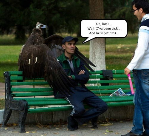 Guardian Vulture