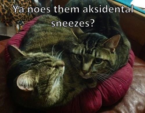 Ya noes them aksidental sneezes?