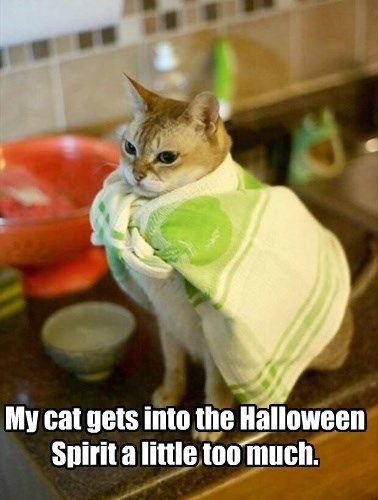 My cat gets into the Halloween Spirit a little too much.