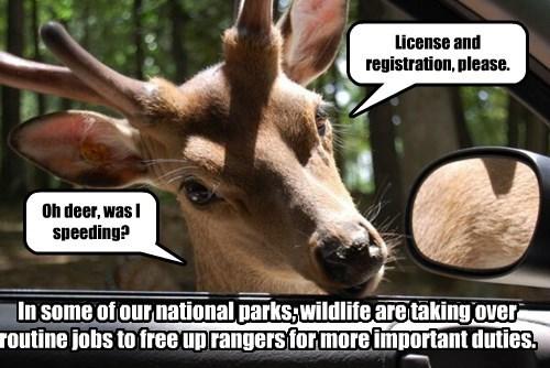 buck,deer,cops,ticket