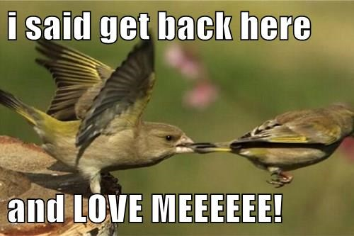 birds,spring time,overly attached girlfriend,love