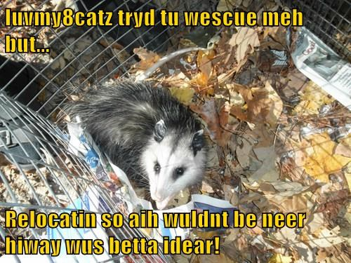 luvmy8catz tryd tu wescue meh but...  Relocatin so aih wuldnt be neer hiway wus betta idear!