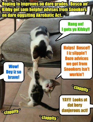 Clive Banks Munnies Class Assignment - Bosco an' Kibby put on an Akrobatic Act in teh Skool Lounge for 2 Monnies.. => Grade reseeved: 4 Mousies out ob 5, good efforts but yu needz mor praktis an' less advices from Snookers!