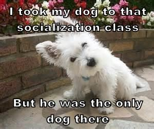 I took my dog to that socialization class  But he was the only dog there