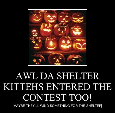 AWL DA SHELTER KITTEHS ENTERED THE CONTEST TOO!