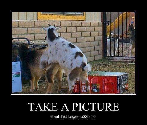 Goats Prefer Privacy