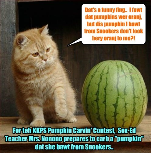 """Not too long after Mrs. Nonono started carbing a """"pumpkin"""" dat she bawt from Snookers, Snookers ended up in teh time Out Bawks!"""