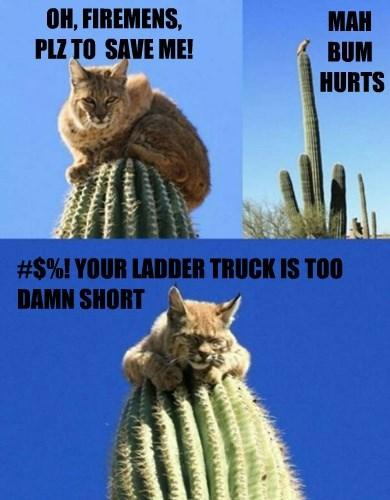 firemen,stuck,cactus,bobcat,Cats