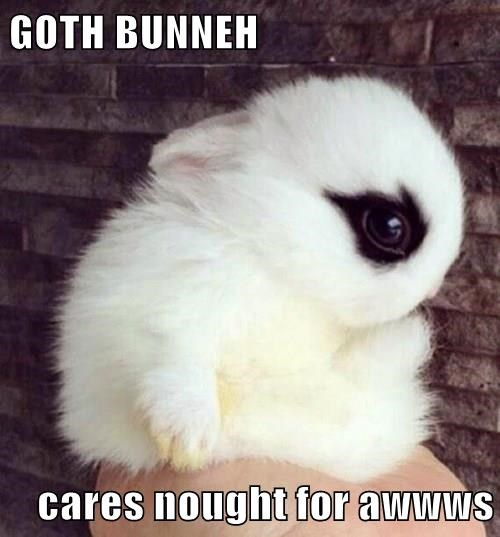 goth,baby animal,bunny,squee