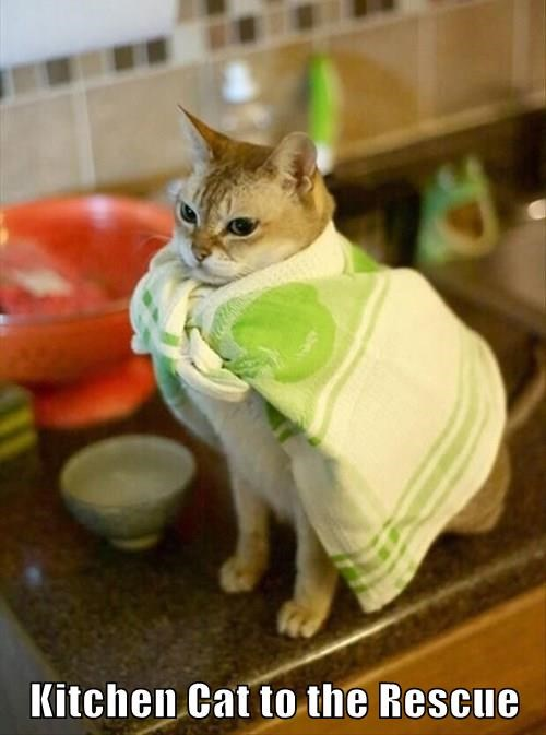Kitchen Cat to the Rescue