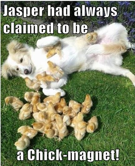 Jasper had always claimed to be  a Chick-magnet!
