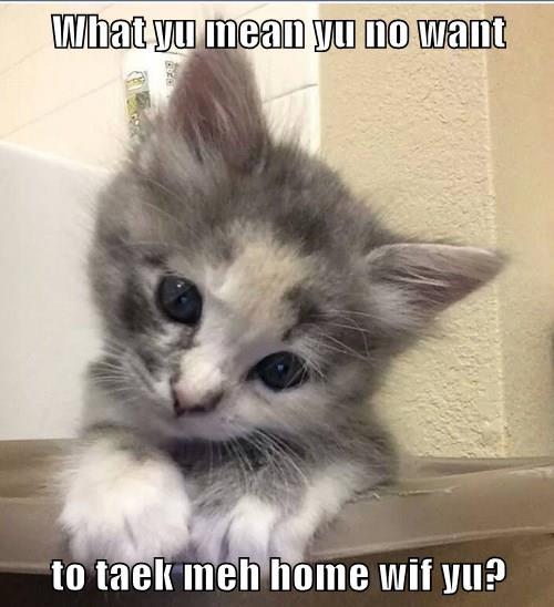 What yu mean yu no want  to taek meh home wif yu?