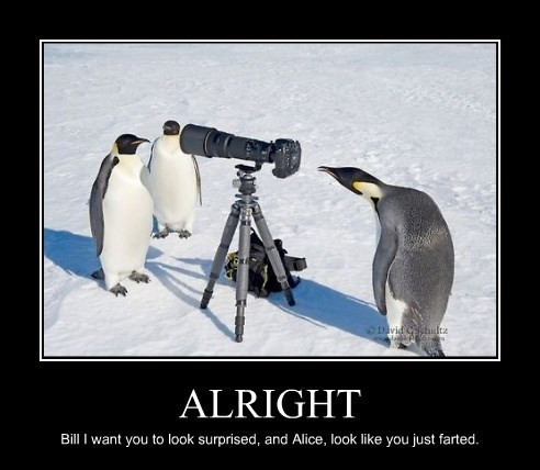 Penguins Love to Take Pictures