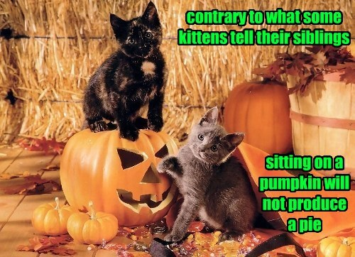 Kitty's Practical Joke Exposed