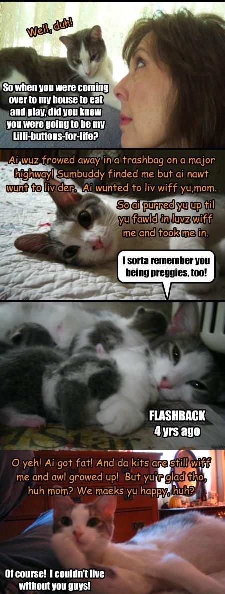 Lilli   Allcat's kittie