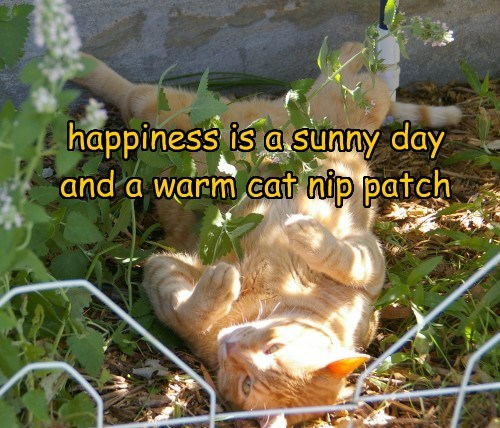 happiness is a sunny day and a warm cat nip patch