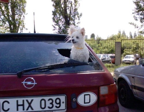 Always Provide Fresh Air When Transporting Your Goggies
