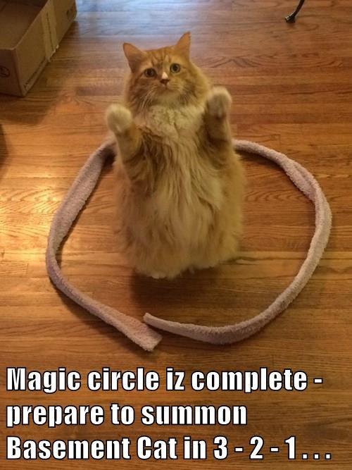 Magic circle iz complete - prepare to summon Basement Cat in 3 - 2 - 1 . . .