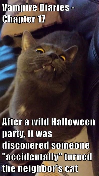 "Vampire Diaries - Chapter 17  After a wild Halloween party, it was discovered someone ""accidentally"" turned the neighbor's cat"