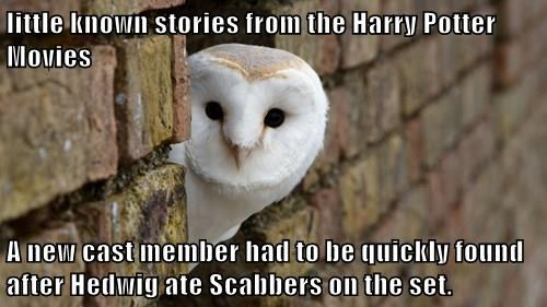 little known stories from the Harry Potter Movies  A new cast member had to be quickly found after Hedwig ate Scabbers on the set.