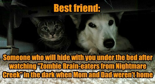 BTW, zombies don't want kitten and goggie brains. Just so ya know.