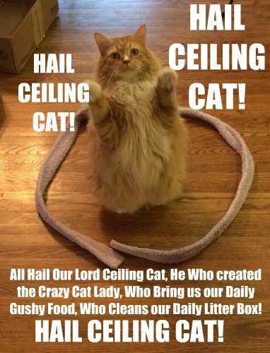 HAIL CEILING CAT!