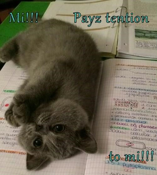 Mi!!!         Payz tention  to mi!!!