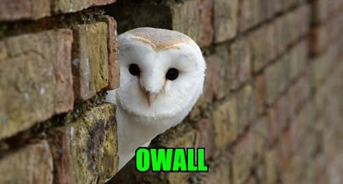F-owl Pun