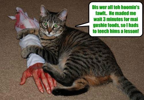 Hoomins must be dissiplinned!