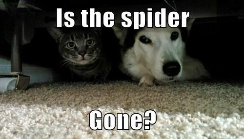 Is the spider  Gone?