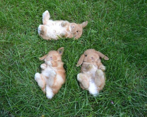 Hoppy Bunday, It's a Tripple Squeeee!