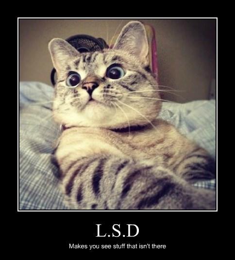 L.S.D