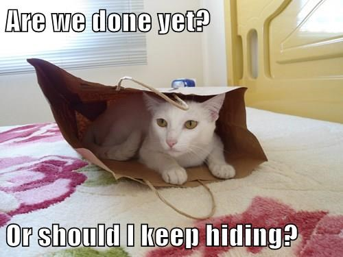 LOLCat is hiding