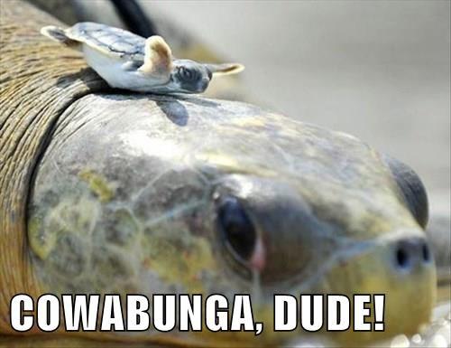 COWABUNGA, DUDE!