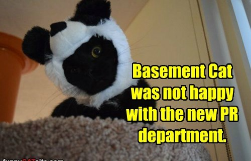 Basement Cat was not happy with the new PR department.