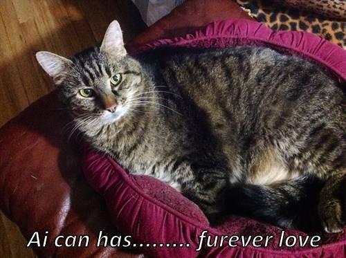 Ai can has......... furever love