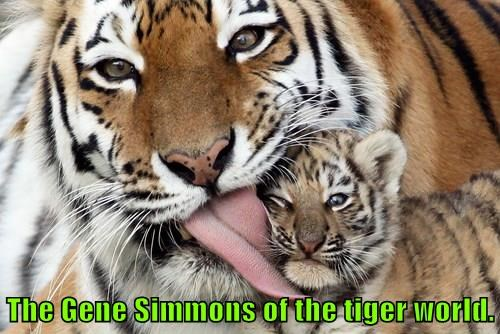 The Gene Simmons of the tiger world.